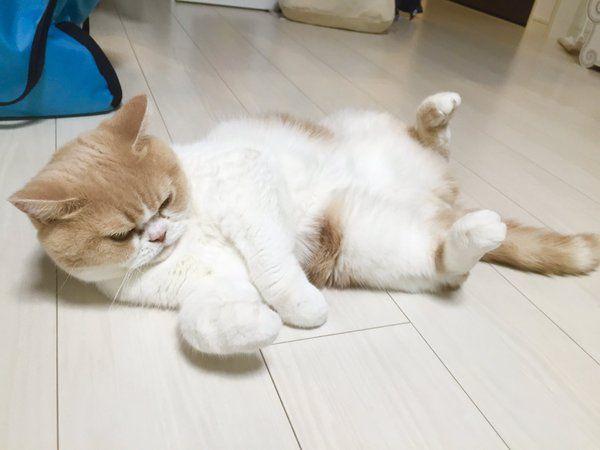 mơ thấy con mèo