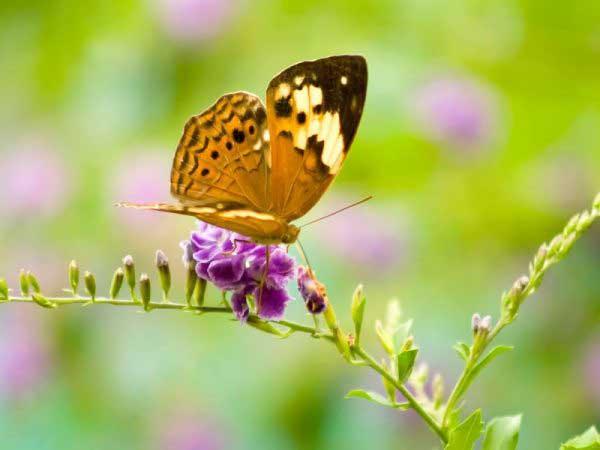 Ngủ mơ thấy bướm - Chiêm bao thấy bướm đánh con gì