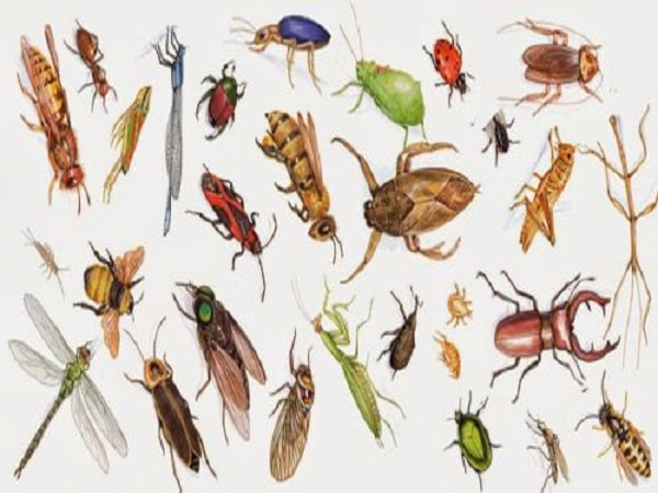 nằm mơ thấy côn trùng