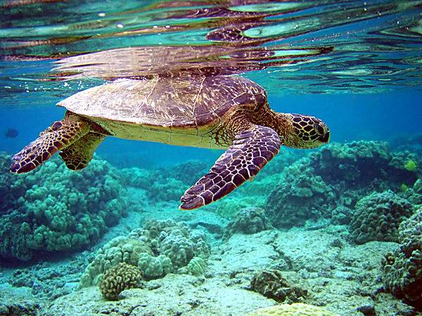Nằm mơ thấy rùa biển chơi xổ số con gì may mắn