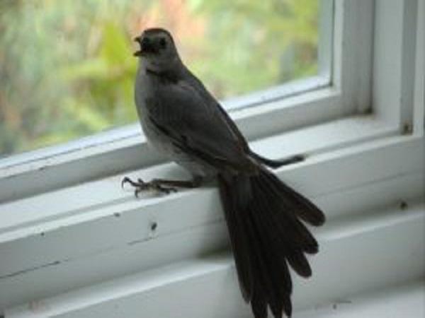 nằm mơ thấy chim bay vào nhà đánh con gì?