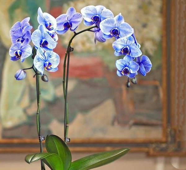 Nằm mơ thấy hoa lan là điềm báo gì nên đánh hôm nay con nào