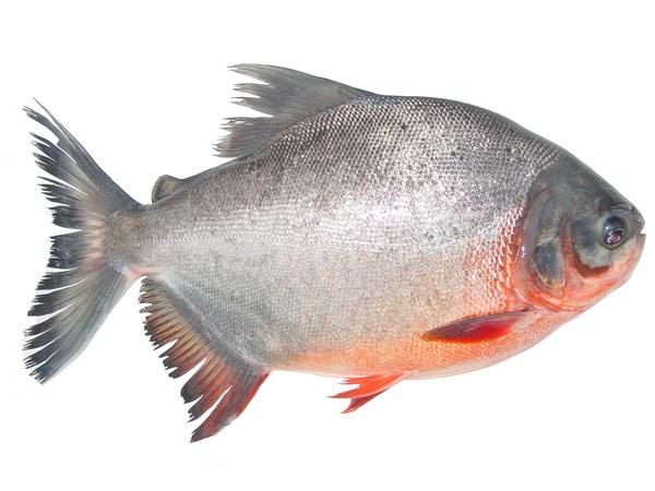 Mơ thấy cá mè điềm báo hên hay xui?