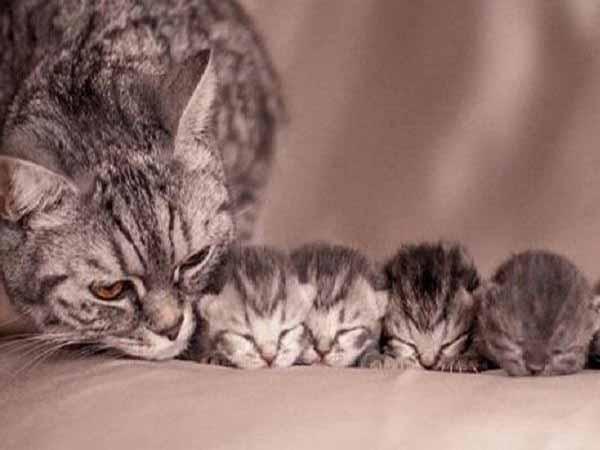 Nằm mơ thấy mèo đẻ đánh con gì ăn chắc, có điềm báo gì