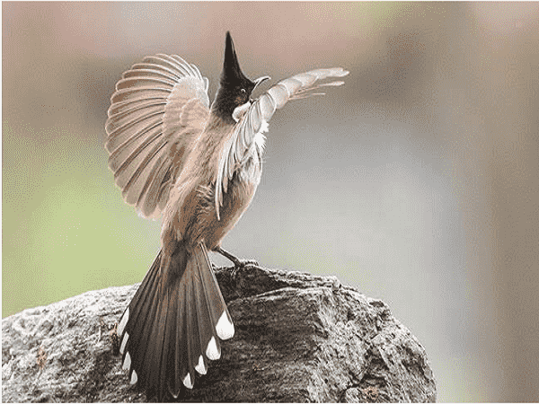 Chêm bao mơ thấy chim chào mào đánh con g